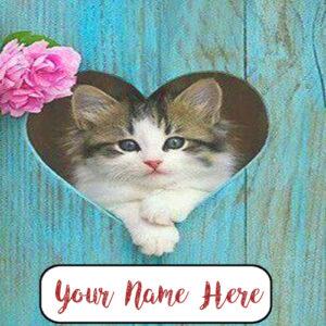 Write Name Beautiful Cutest Cat Profile Image Edit Online