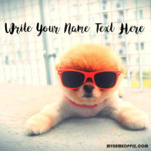 Write Name Profile Cute Dog Image Status Name Edit Pictures